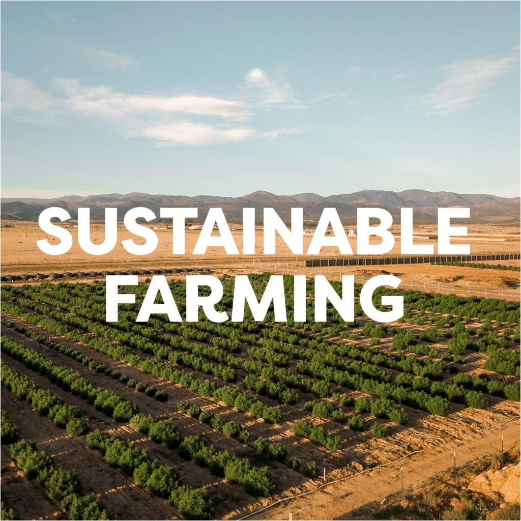 The Sustainable Farming Practice of Veritas Farms
