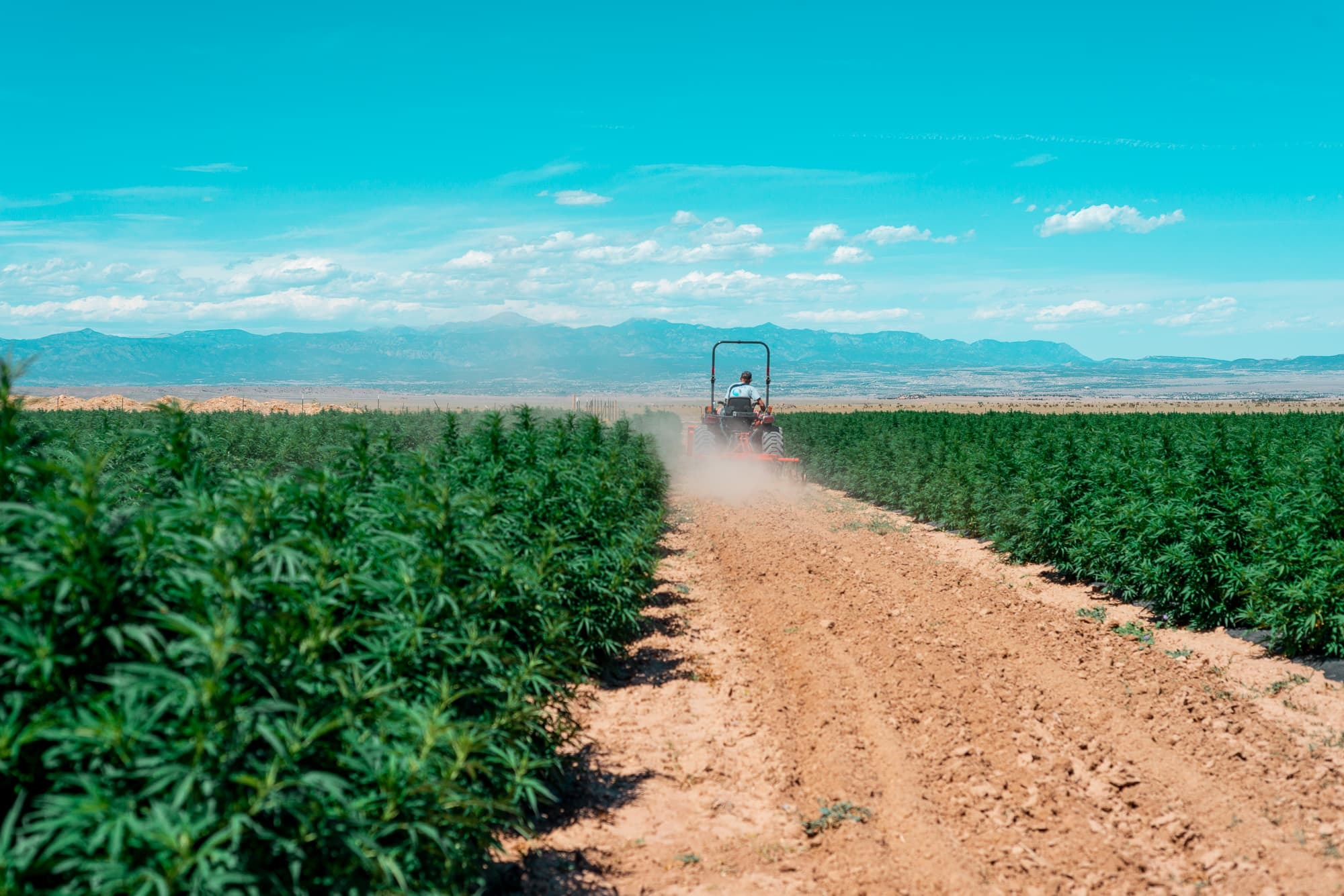 Veritas Farms | More Than Just CBD