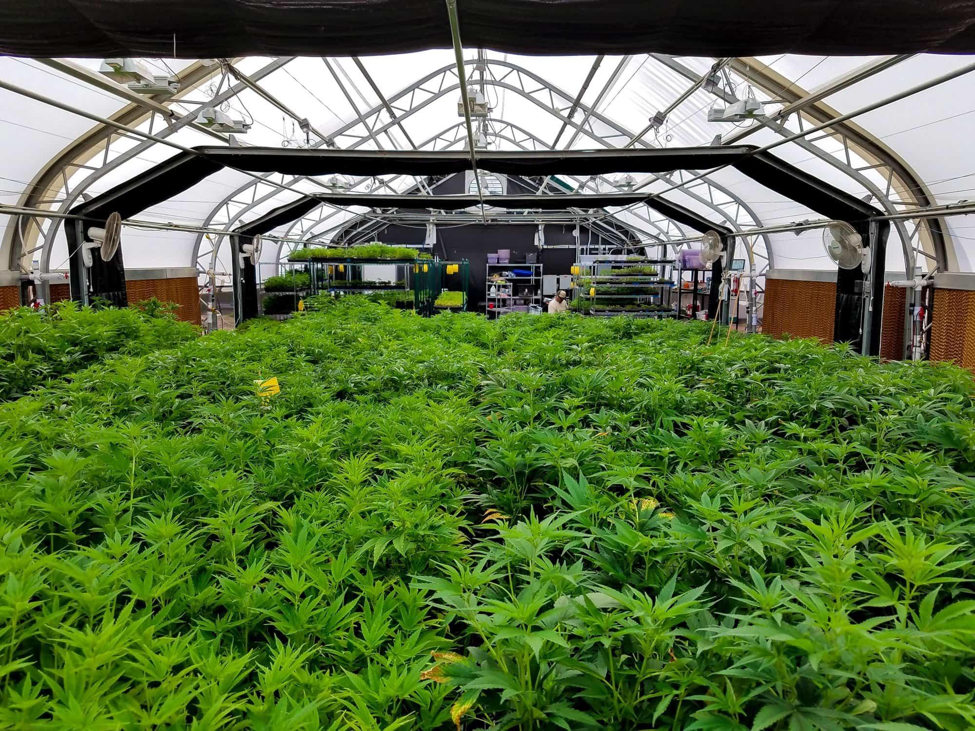 About Veritas Farms: A Full Spectrum Hemp Farm in Pueblo