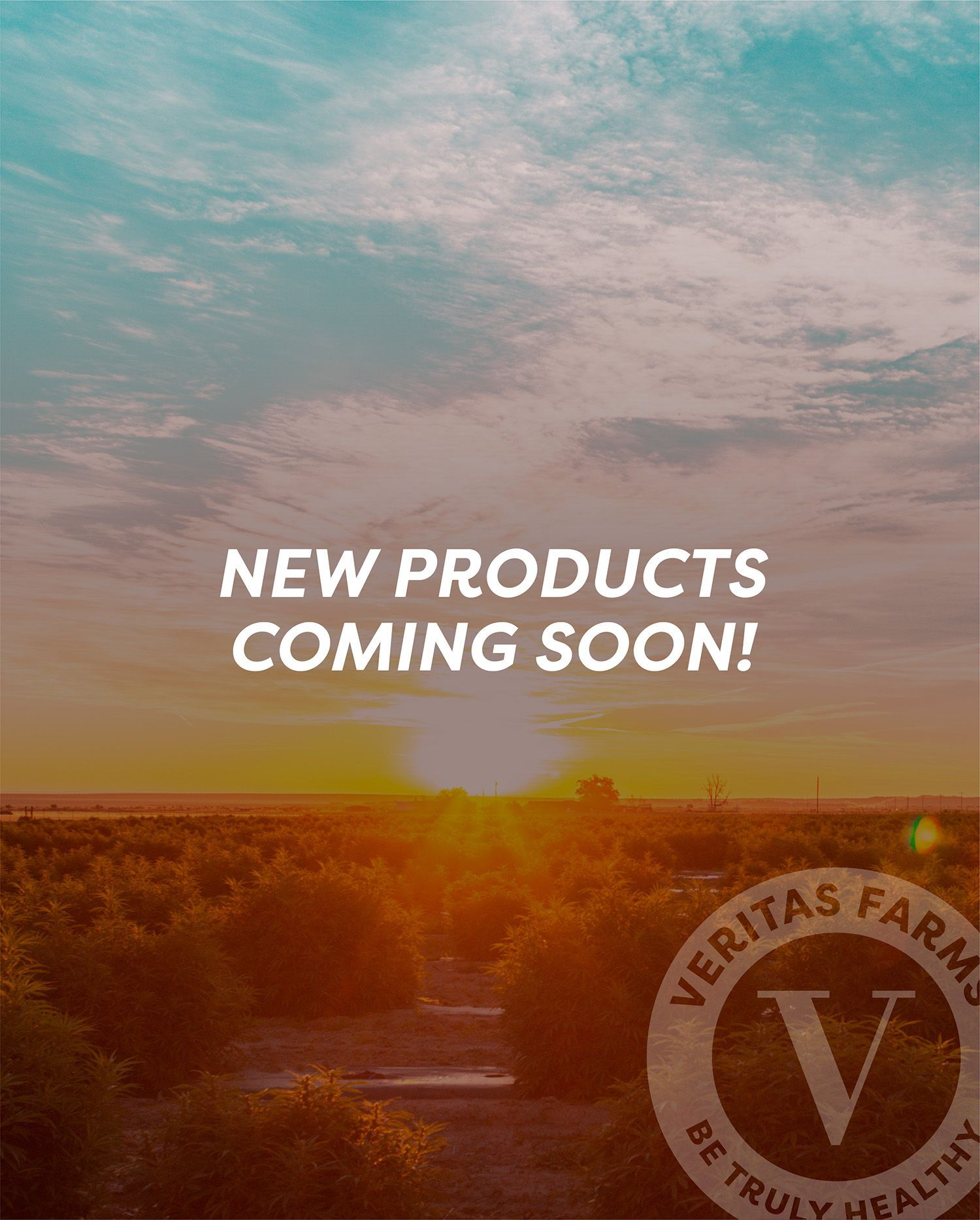 new cbd products coming soon