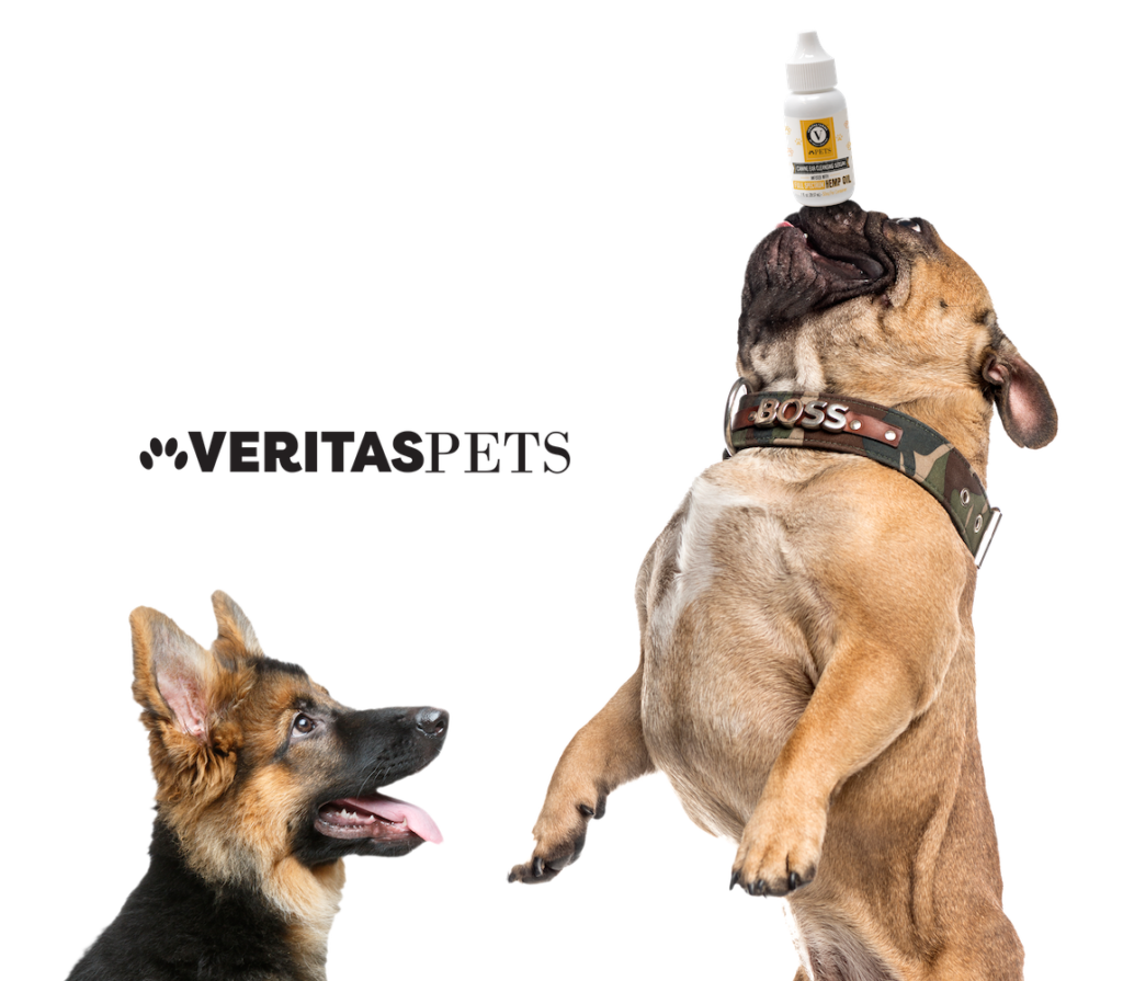 cbd oil for dogs veritas pets
