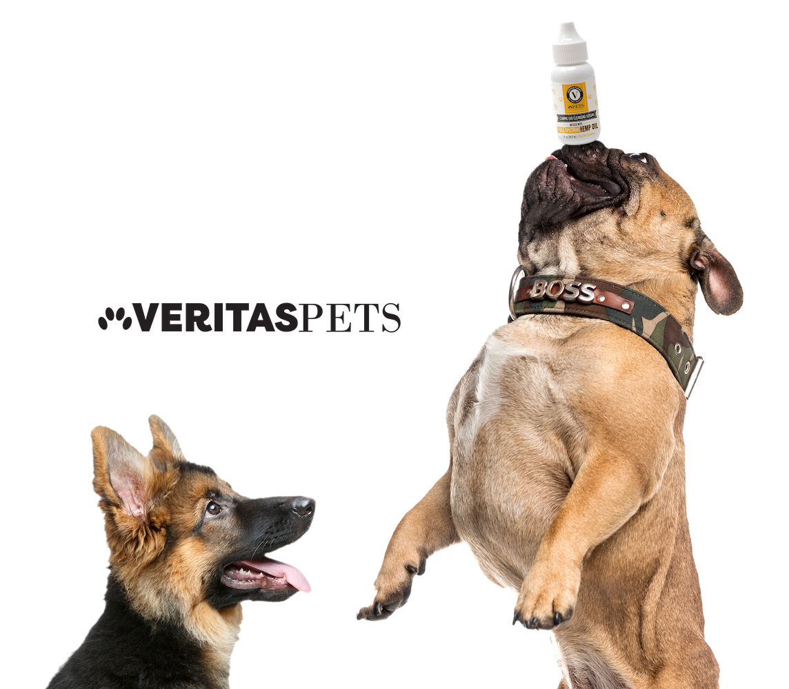cbd oil for dogs veritas pets