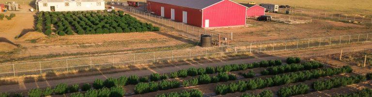 Hemp Products Right Off the Cannabis Farm
